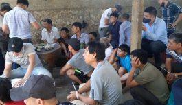 Bắt quả tang trường gà quy mô lớn tại Nghệ An
