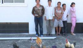Công an bí mật vây tụ điểm đá gà ăn tiền tại An Giang