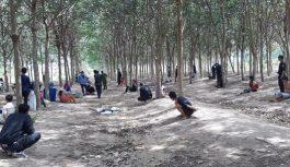 Triệt phá sòng tài xỉu giữa rừng cao su ở Tây Ninh