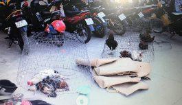Công an tỉnh Tây Ninh liên tiếp triệt phá các sòng bạc, trường gà