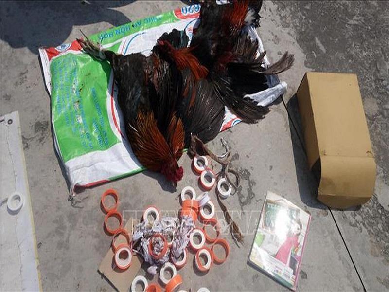Triệt phá tụ điểm đá gà ăn tiền, thu giữ tại hiện trường hơn 100 triệu đồng