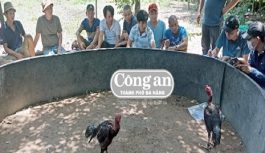 Trường gà di động tại Quảng Nam bị triệt xóa, bắt giữ 20 đối tượng