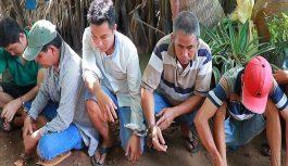 Vây bắt hàng chục con bạc liên tỉnh tham gia đá gà ăn tiền tại vĩnh Long